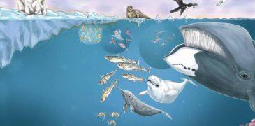 Новая книга: «Под арктическим льдом»