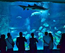5 августа — 5 лет Центру океанографии и морской биологии «Москвариум»