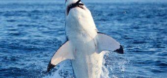 Тест: что ваши дети знают об акулах? (самым умным – подарки)