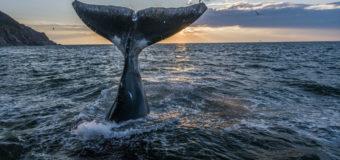 14 сентября открывается фотовыставка «Живые моря Российской Арктики»