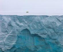 Фото дня: фотопроект «Живые моря Российской Арктики»