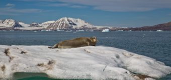 В Дарвинском музее открылась выставка «Из Русской Арктики с любовью»