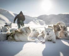 Выставка «Прикоснись к Арктике» открылась в Петербурге