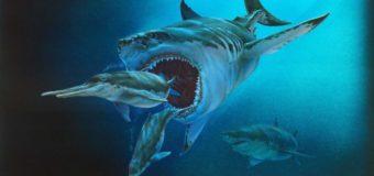 Доисторическая акула мегалодон была размером с автобус