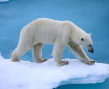 Нацпарк «Русская Арктика» откроет туристам русское Поморье