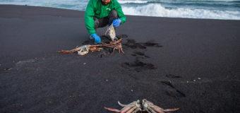 В РАН считают токсичные водоросли причиной загрязнения на Камчатке