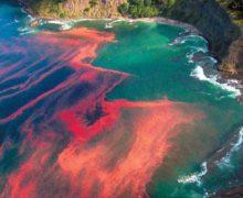 Эксперт: цветение водорослей на Камчатке может быть связано с глобальным потеплением