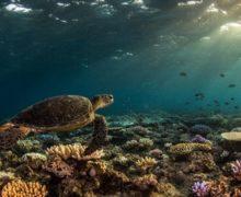 Обнаружен огромный коралловый риф высотой в полкилометра