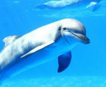Ученые предупредили об угрозе исчезновения китов и дельфинов