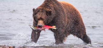 Ассоциация «Русский лосось» запустила интерактивную карту