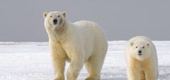 27 ноября для школьников пройдёт экологический онлайн-урок «Открываем Арктику вместе»