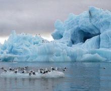Ученые доказали возможность разложения биопластика в Арктике