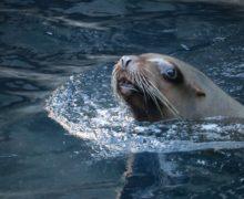 Онлайн лекция: «Млекопитающие в океане — как им живется сейчасрски