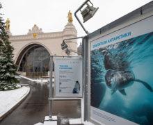 В Москве начала работу фотовыставка «Открываем Антарктику вместе»