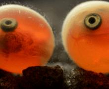 Фильм «Нерка. Рыба красная» выходит на широкий экран