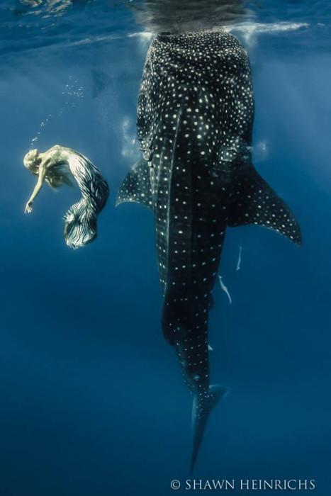 hannah fraser русалка и тигровая акула
