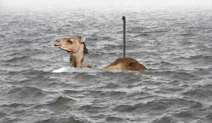 верблюд - подводник