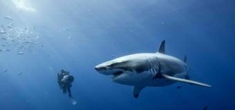 Акулы в 2014 году съедят больше людей