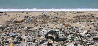 Пластик стал частью пищевой системы Океана