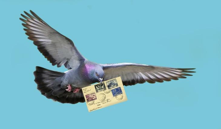 военный голубь