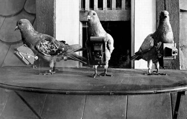военный голубь фотограф