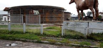 В цистернах на ВДНХ целый год живут две касатки