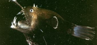 Первое в мире видео Морского черта