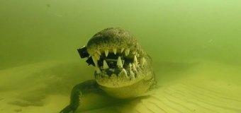 Крокодил отнял у дайвера видеокамеру