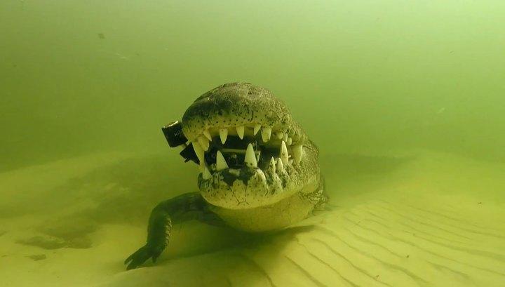 Крокодил украл видеокамеру