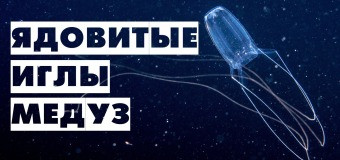 Как жалит медуза