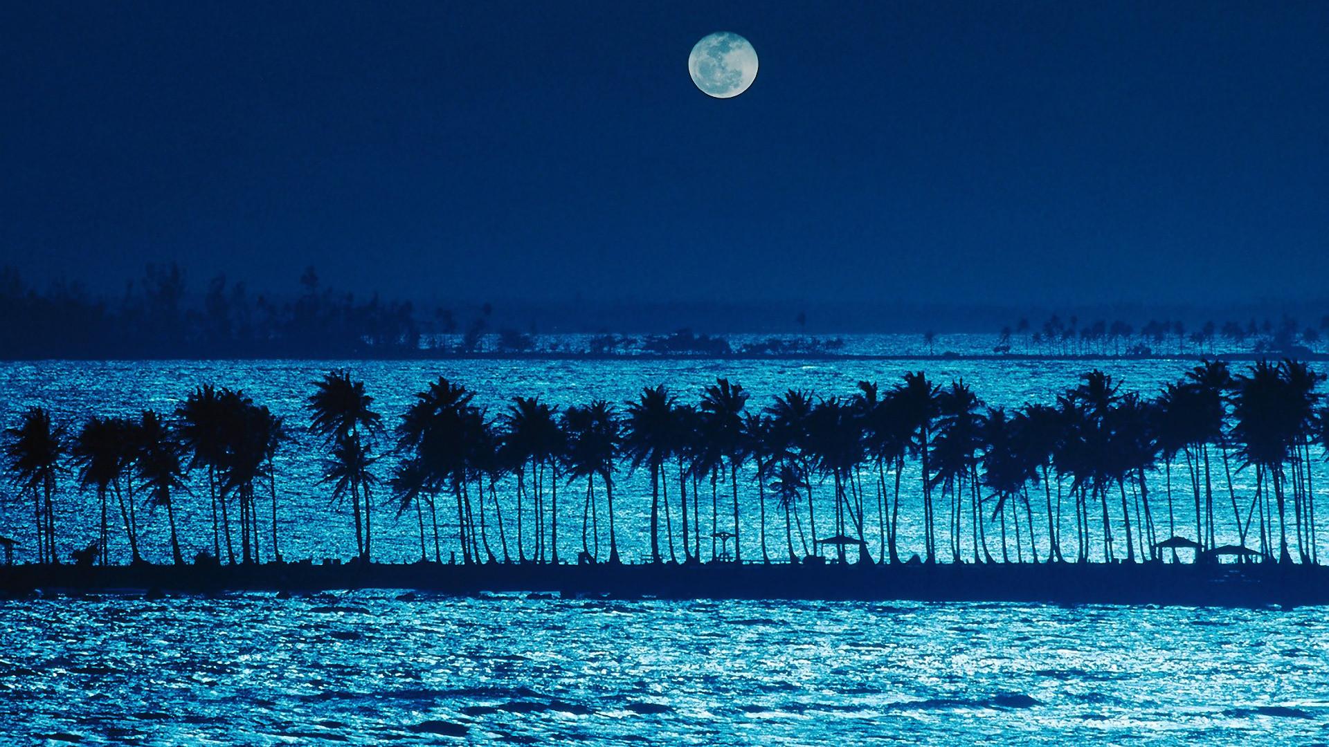 Пальмы и вода ночью на Пуэрто-Рико.