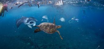«Пластиковые» морепродукты