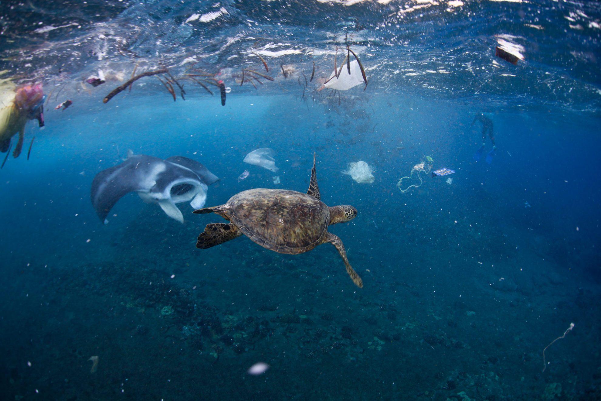 Обитатели моря в окружении мусора в океане