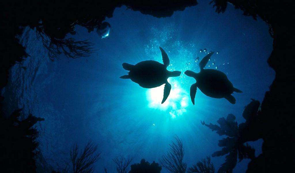 Animals___Under_water__001953_27