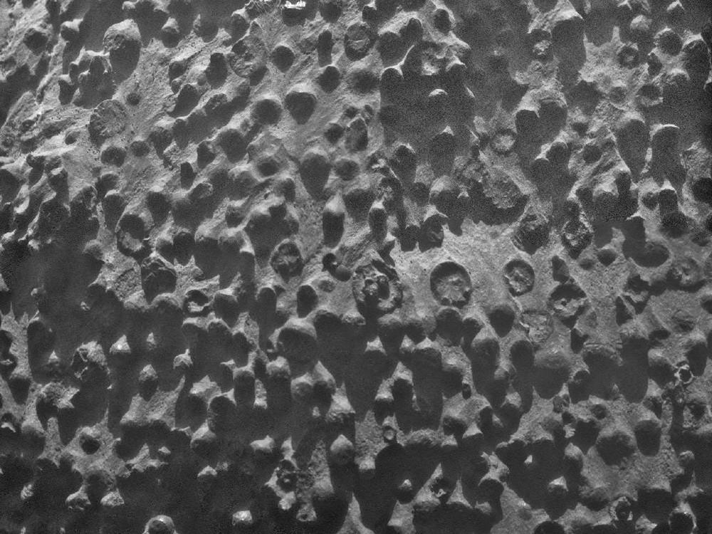 Марганцевые конкреции на дне Атлантического океана (30°37' с. ш., 59°07' з. д., глубина 5500 м, 300 миль к юго-востоку от Бермудских островов)