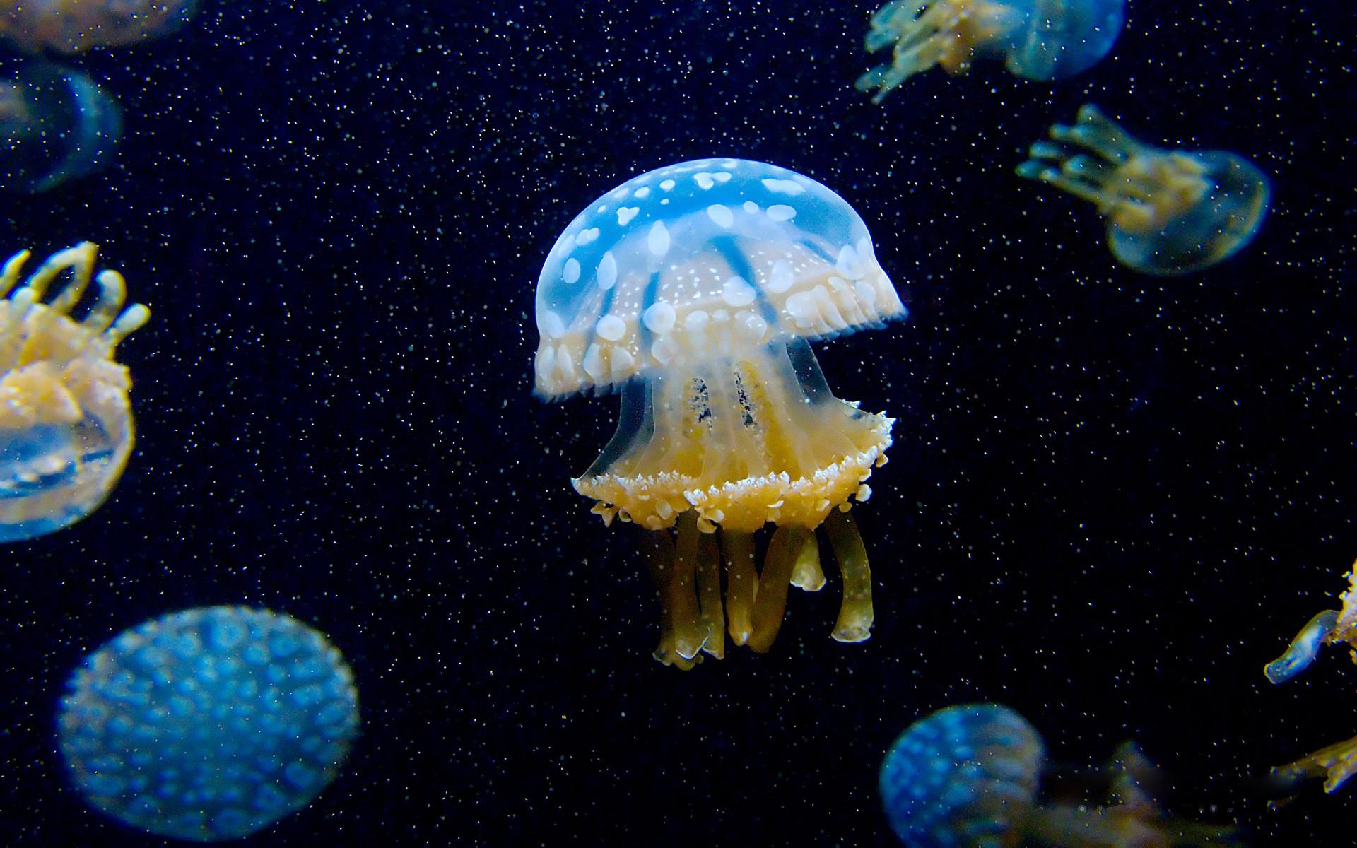 http://ocean-media.su/wp-content/uploads/2015/03/Meduzy-pod-vodoj.jpg