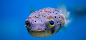 Позитивная рыба-очаровашка.
