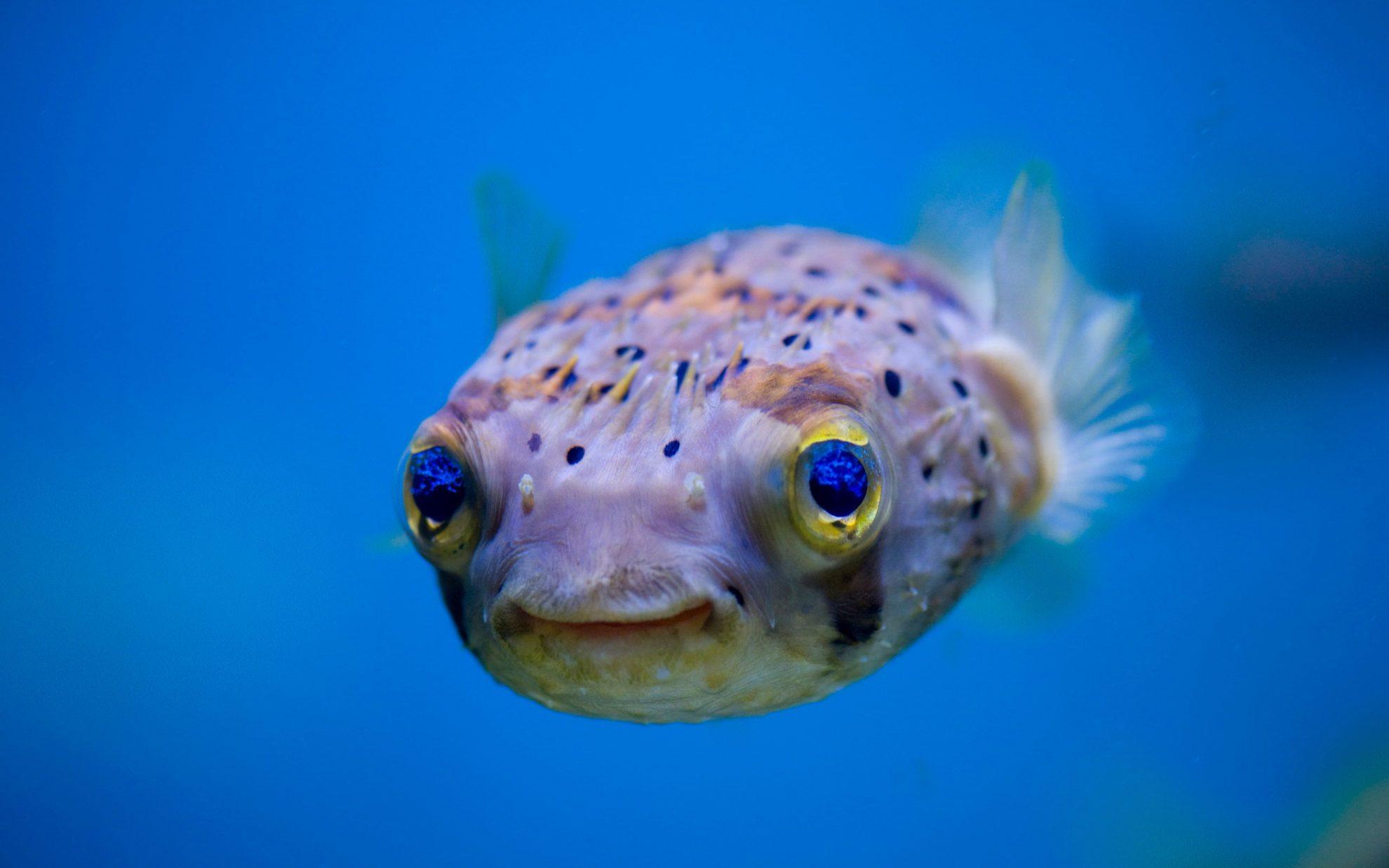 Позитивная рыба-очаровашка
