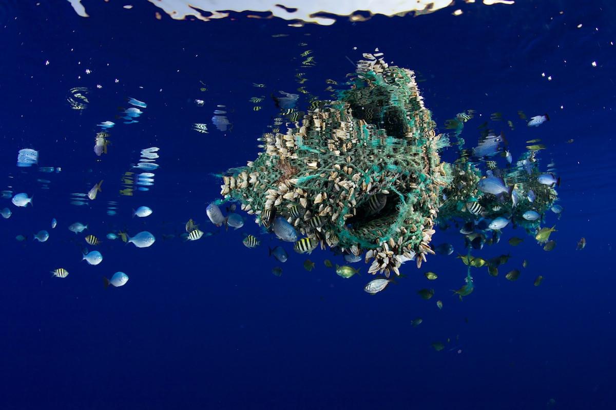 Мусорные пятна - новый дом для обитателей моря.