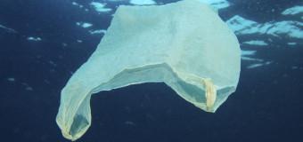 Принц Чарльз выступил за защиту чистоты Океана.