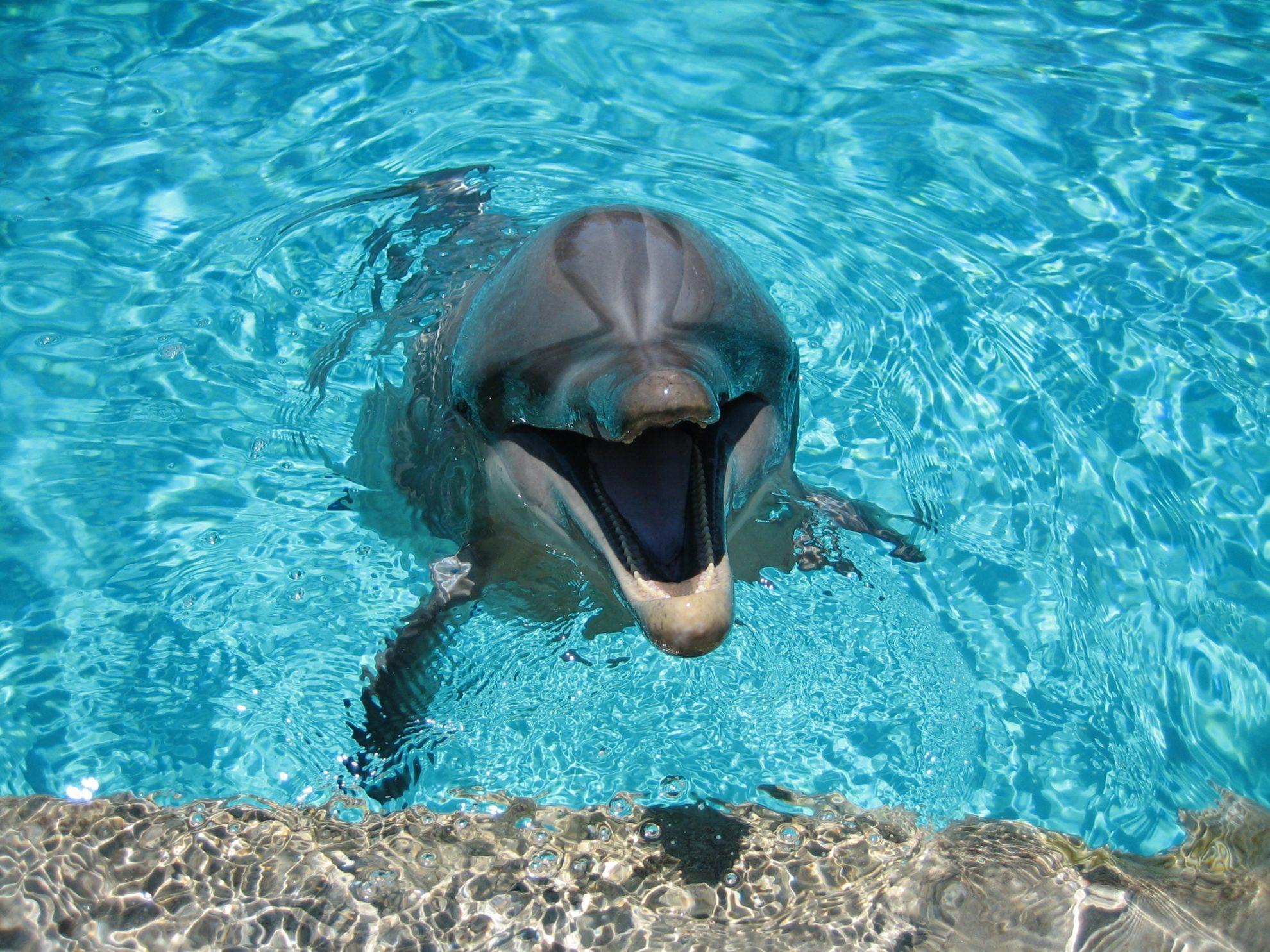 Дельфин в неволе.