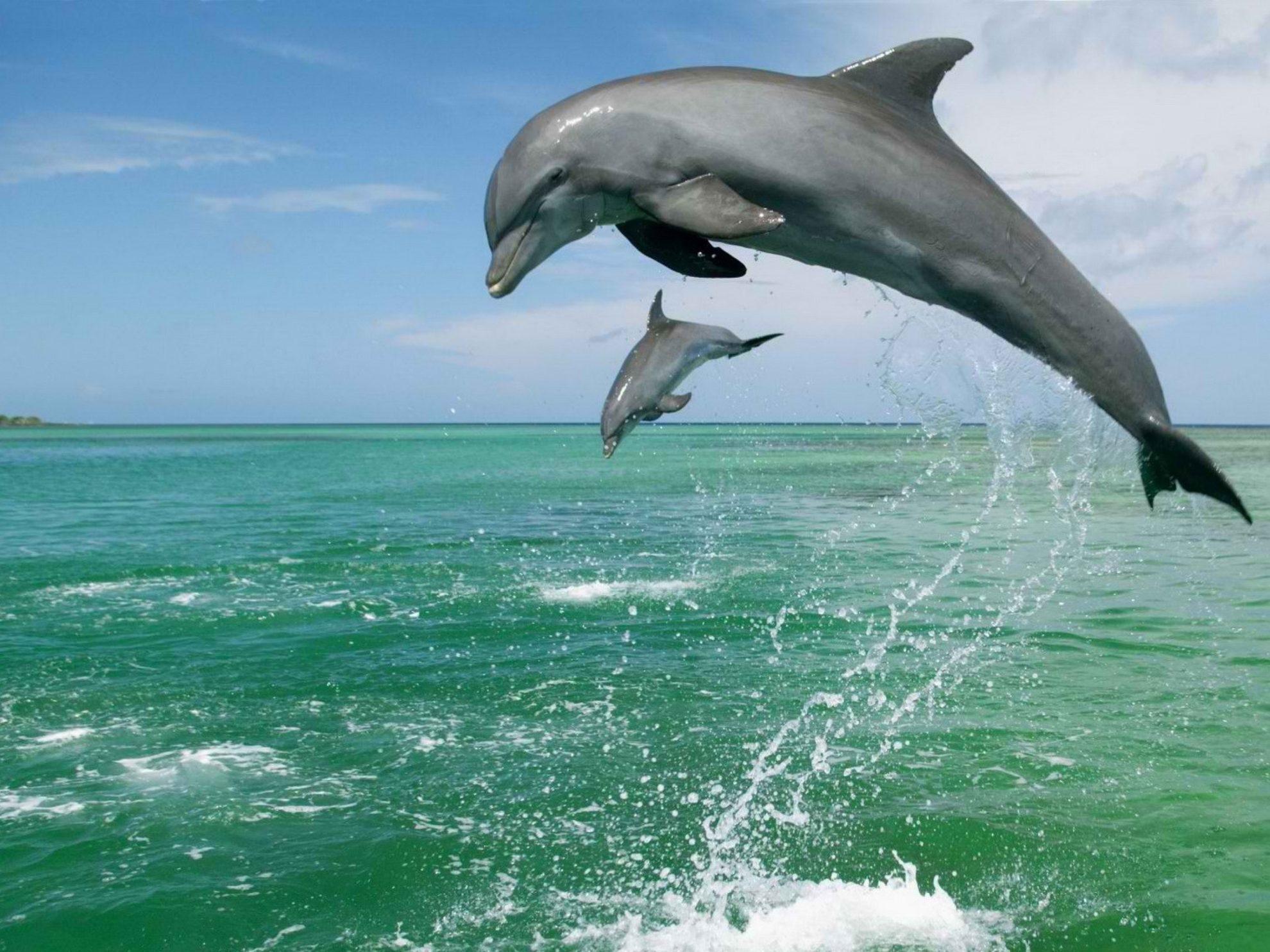 Дельфины любят играть.. Но именно так они и охотятся.