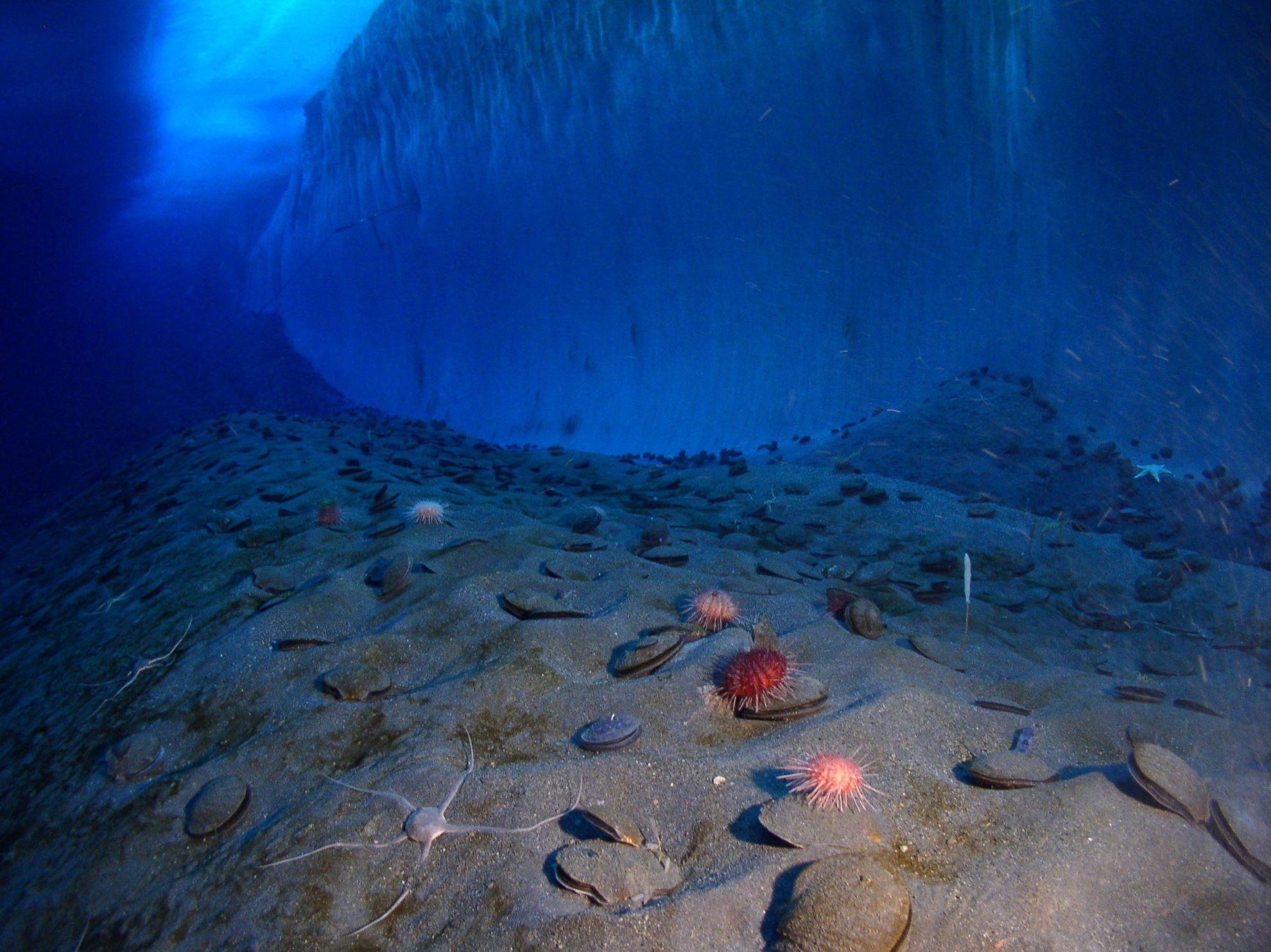 Дно южного океана. Фото:  Steve Clabuesh