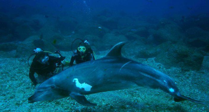 Philip Sheehan - Dolphin