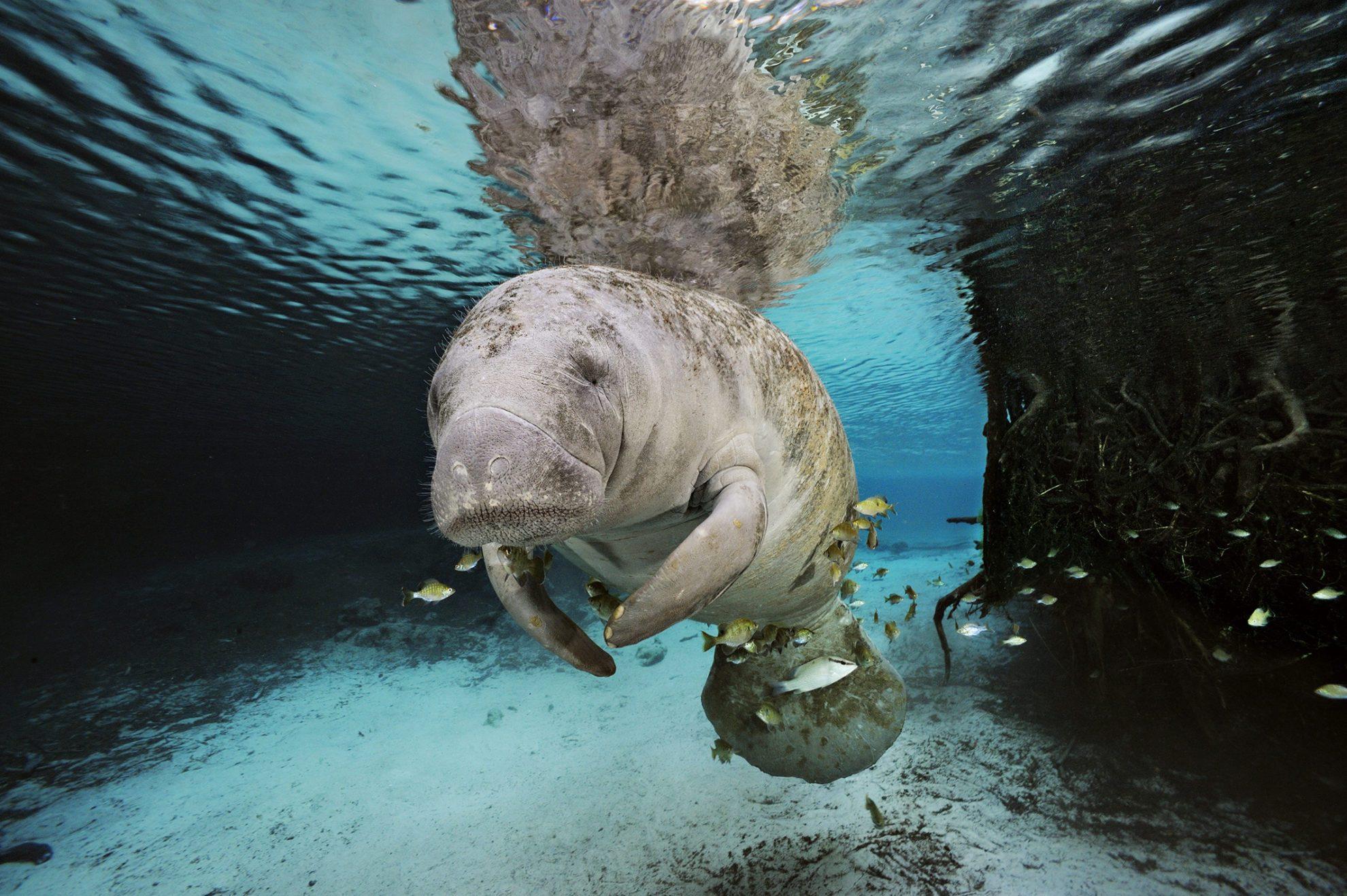 Лики Планеты Океан. Фотограф Brian Skerry