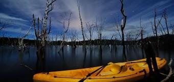 Мертвый лес Новой Каледонии
