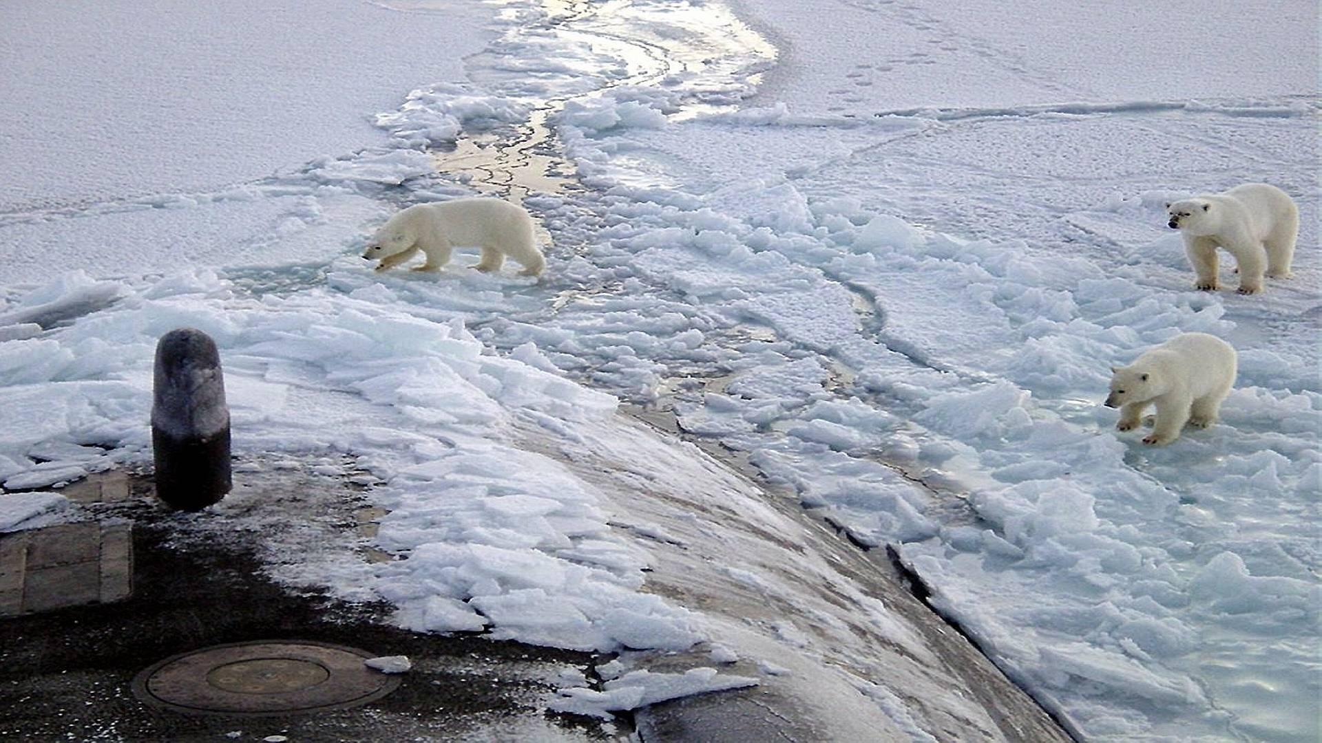 Атомная субмарина  и полярные медведи.