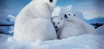 Завершён конкурс арктического рисунка