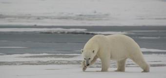 Такая разная Арктика