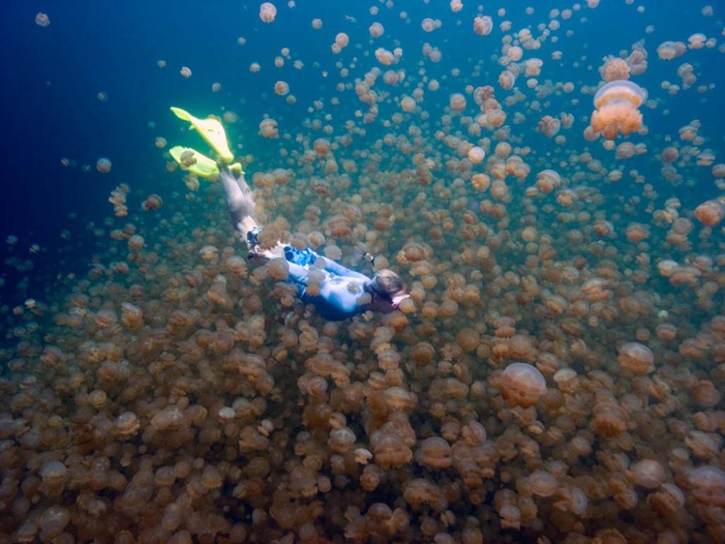 Только на Палау можно поплавать среди миллионов медуз